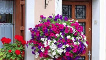 fleurs jardinières