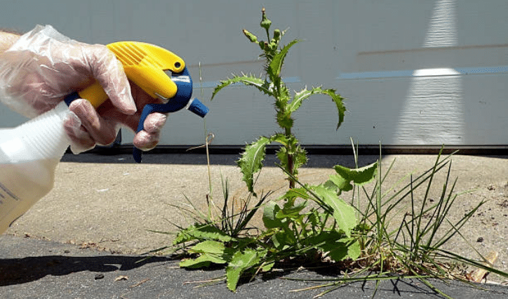 spray pulvérisateur mauvaises herbes