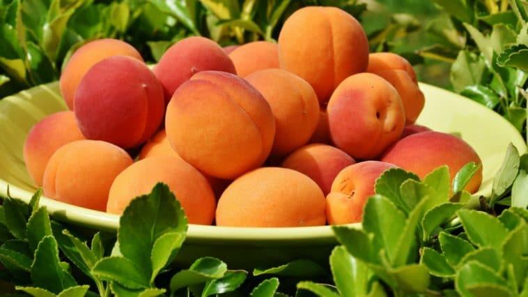 abricot vertus bienfaits