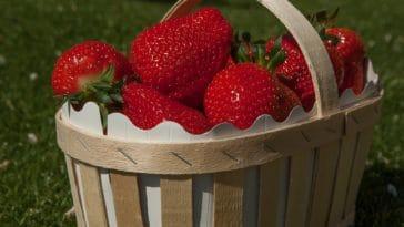 fraises panier