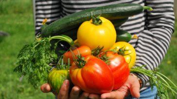 potager légumes septembre au jardin