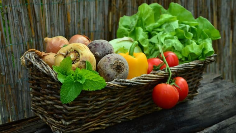 légumes potager