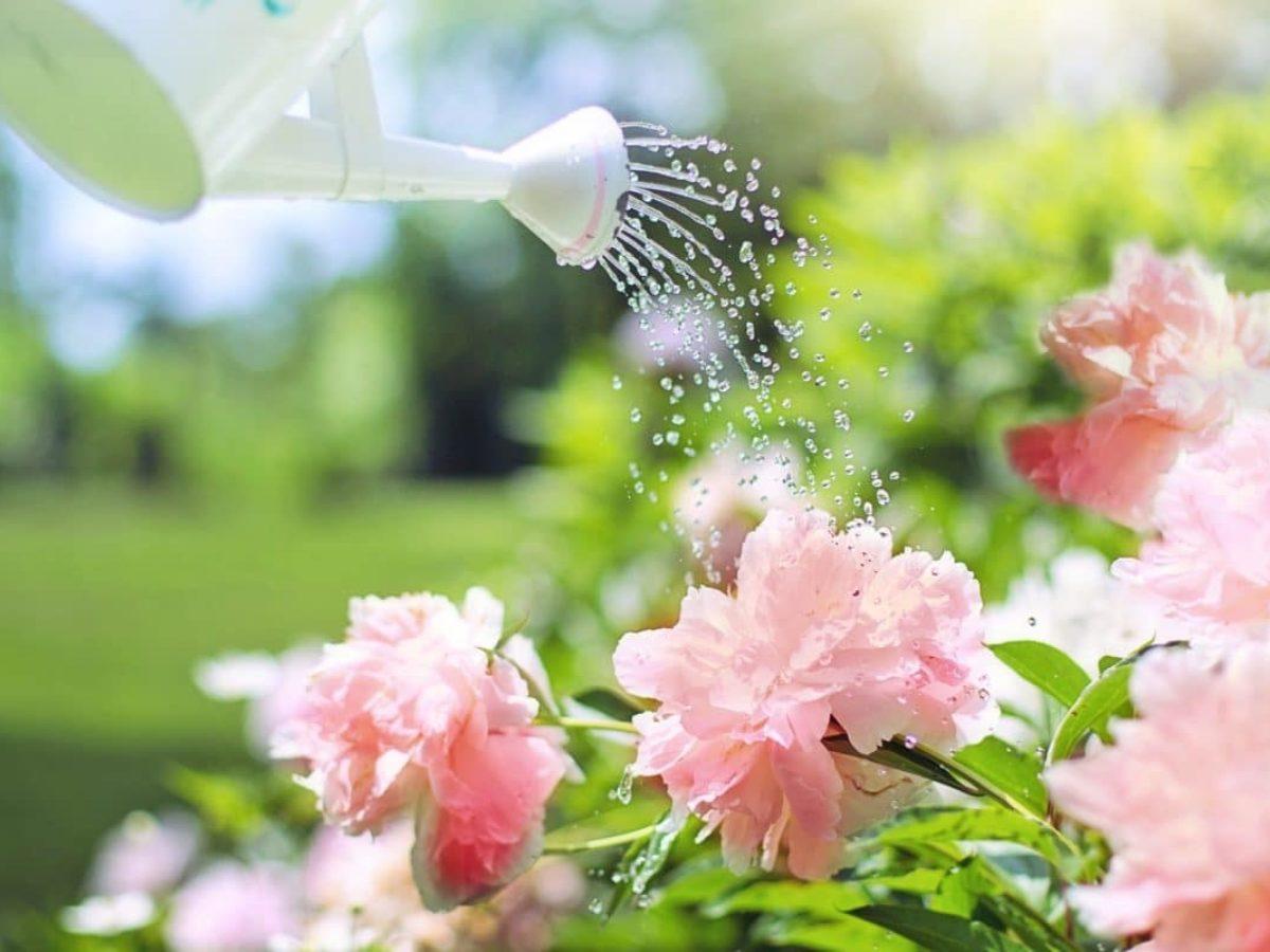 Systeme Arrosage Potager Vacances vacances : les astuces pour prévoir l'arrosage de vos plantes