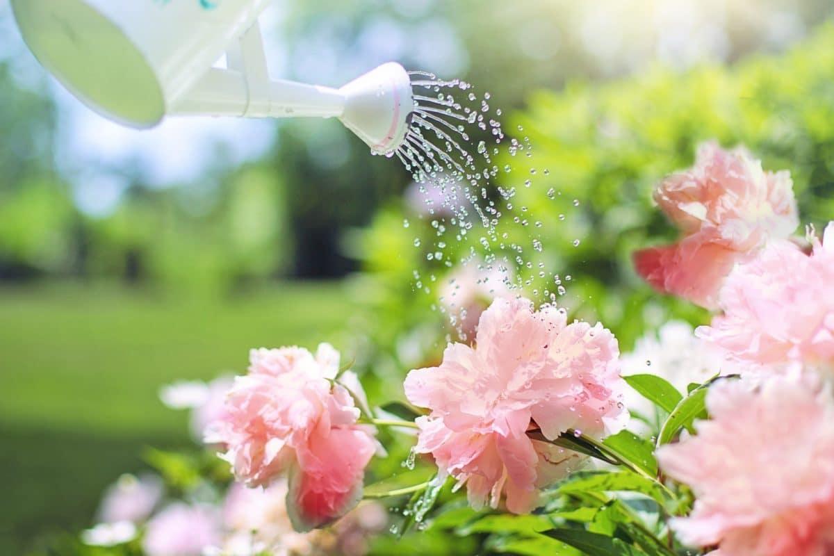 vacances : les astuces pour prévoir l'arrosage de vos plantes
