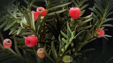 if arbre plante buisson