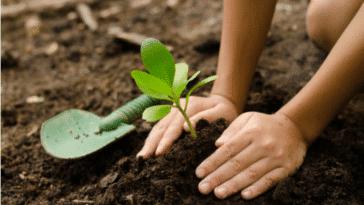 jardiner permaculture