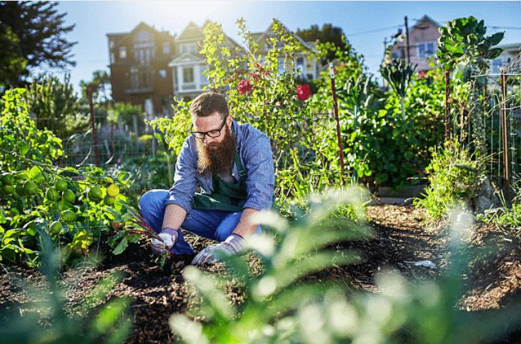 potager bio jardiner