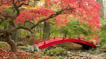 jardin japonais pont automne