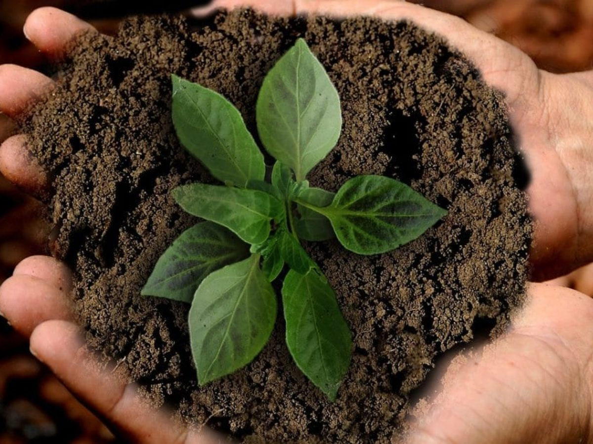 9 astuces pour connaître la nature du sol dans votre jardin
