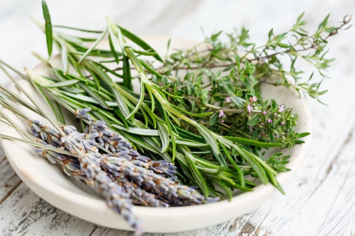 plantes de France aromates