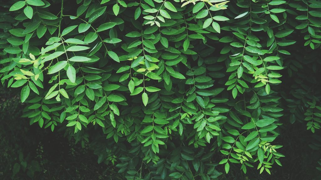feuille feuillage jardin