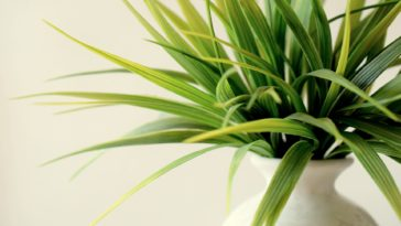 Plantes verte
