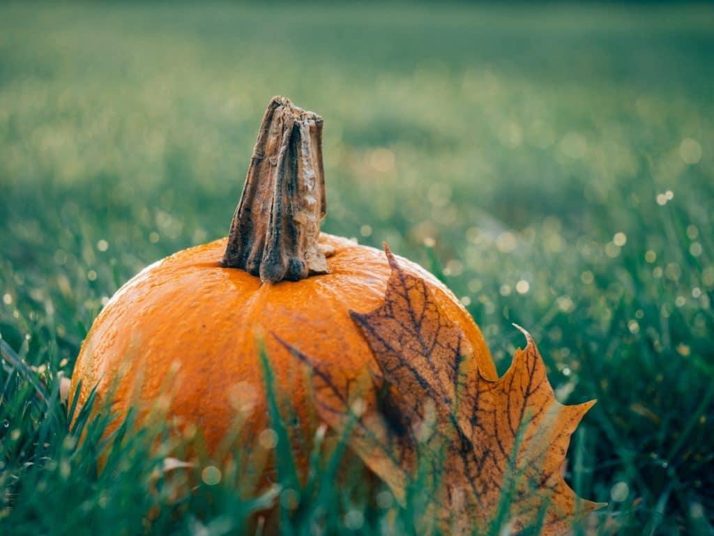citrouille automne