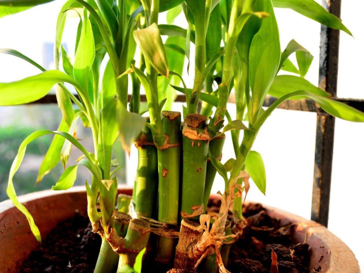 Comment Se Débarrasser Des Bambous Dans Le Jardin bambou : tout ce qu'il faut savoir sur sa plantation et son