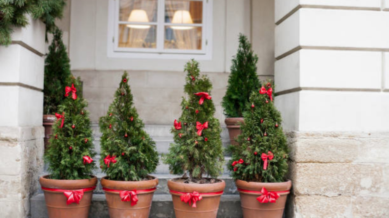 jardin de Noël arbre sapin déco