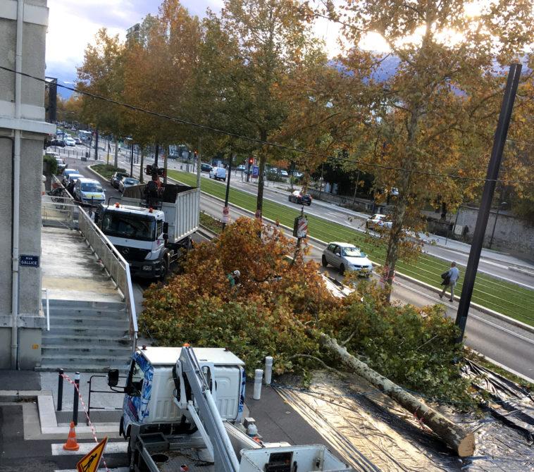 Grenoble platanes