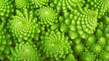 nature chou romanesco