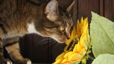 plantes d'intérieur toxiques pour votre chat