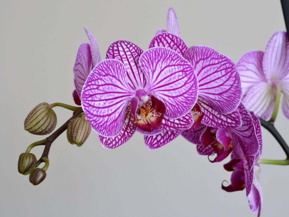 Comment Planter Une Orchidée orchidée : comment la faire durer ? - jardiner facile
