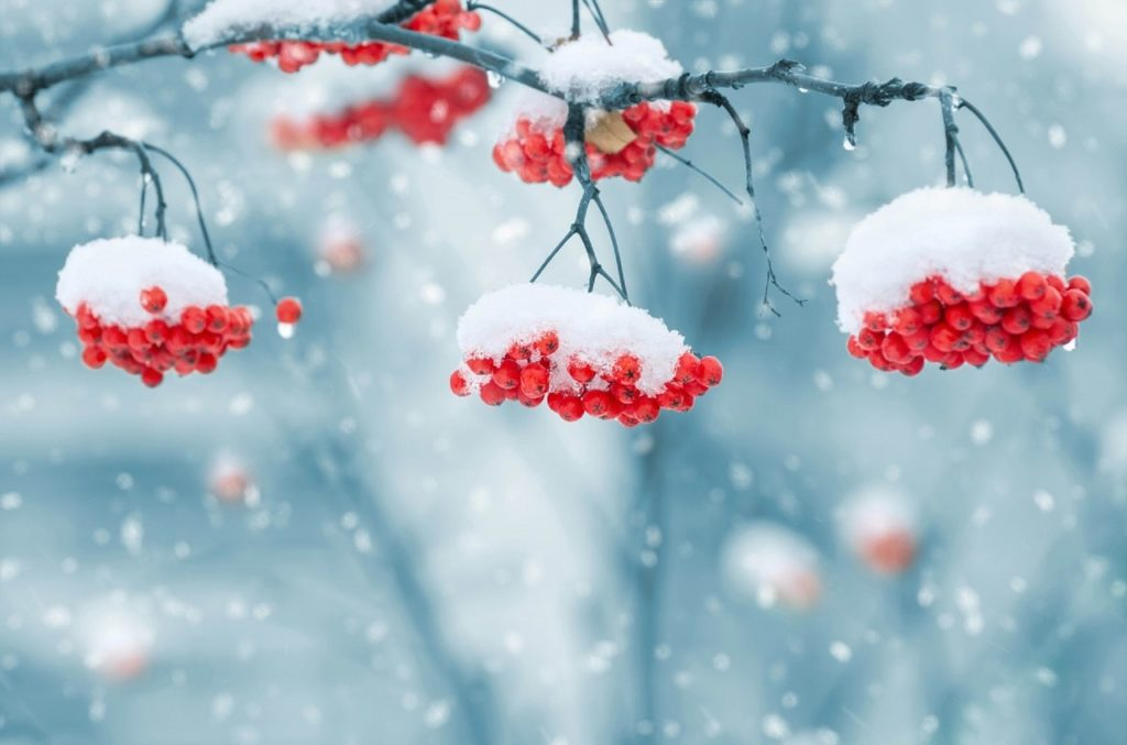 neige jardin baies