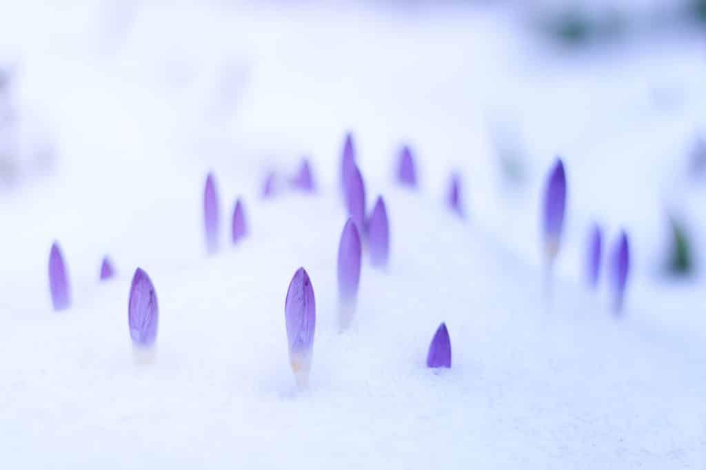 Février au jardin neige
