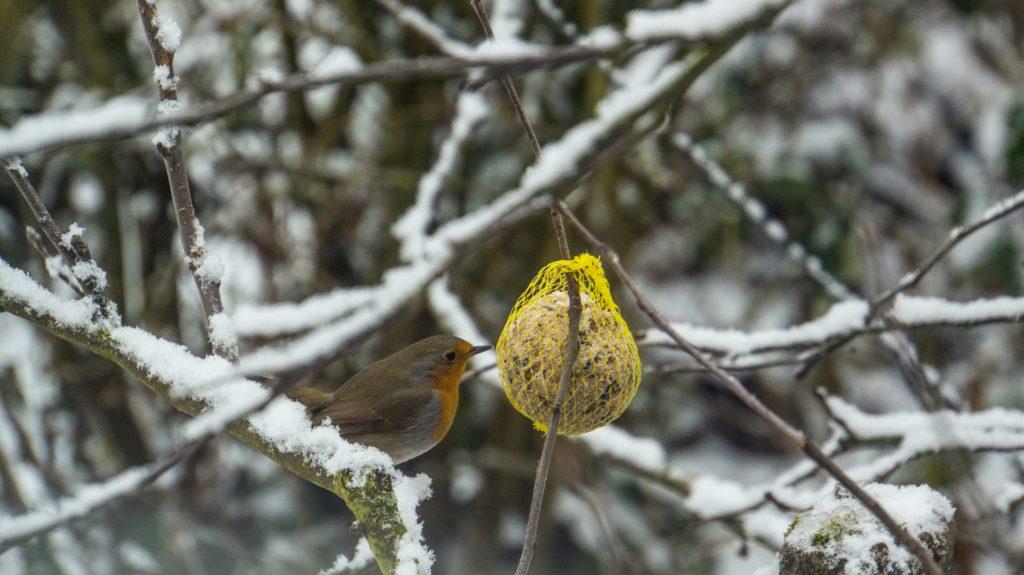 Février au jardin oiseau