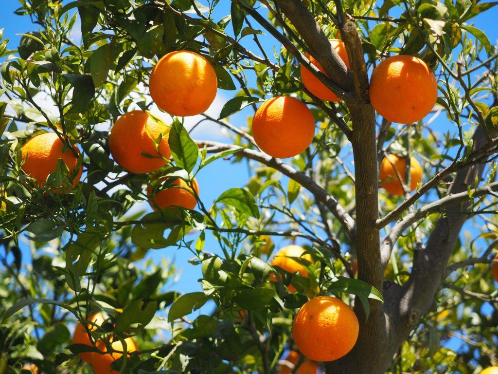 oranges oranger