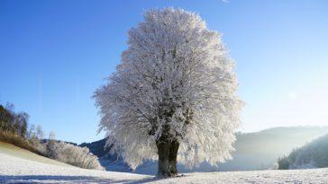 hiver neige paysage arbre