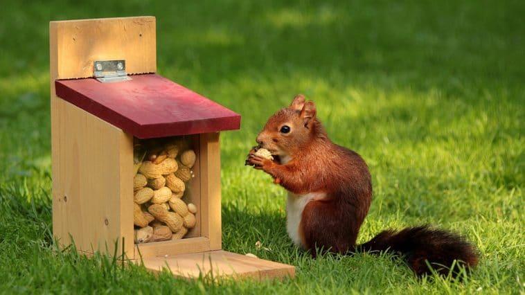 écureuils jardin