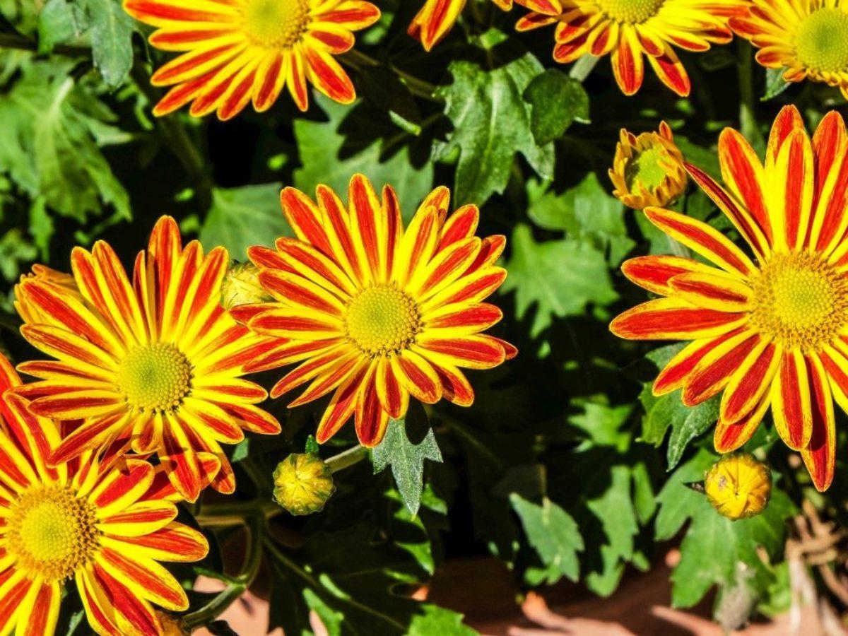 Plante Exterieur Toute Saison Pas Cher 10 plantes d'extérieur très faciles à cultiver pour les
