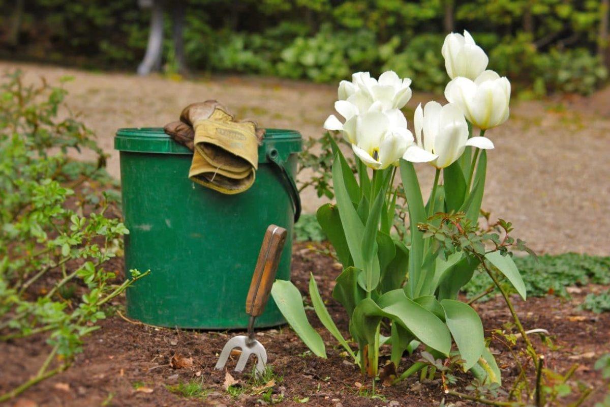 Comment Tailler Le Laurier Sauce mars au jardin : ce qu'il faut faire, planter et récolter à