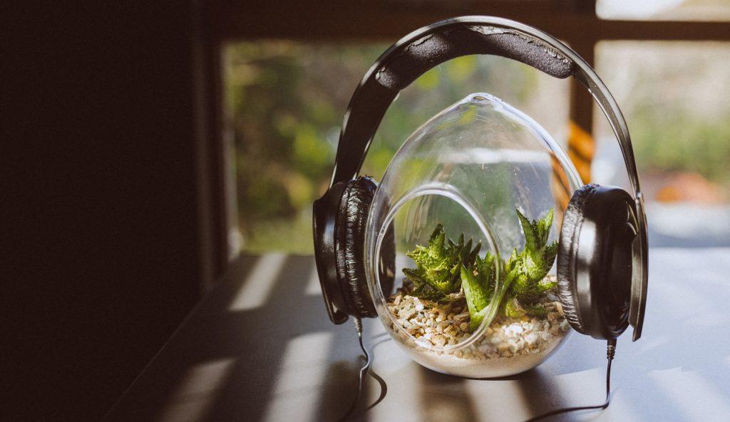 plantes musique