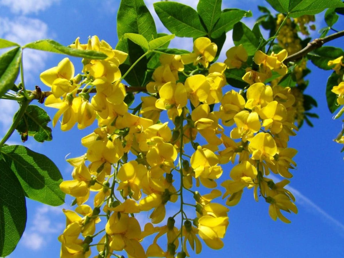 Graines De Fleurs Qui Poussent Très Vite terre sableuse : 8 plantes idéales pour un sol sableux