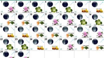 Calendrier lunaire Avril 2019