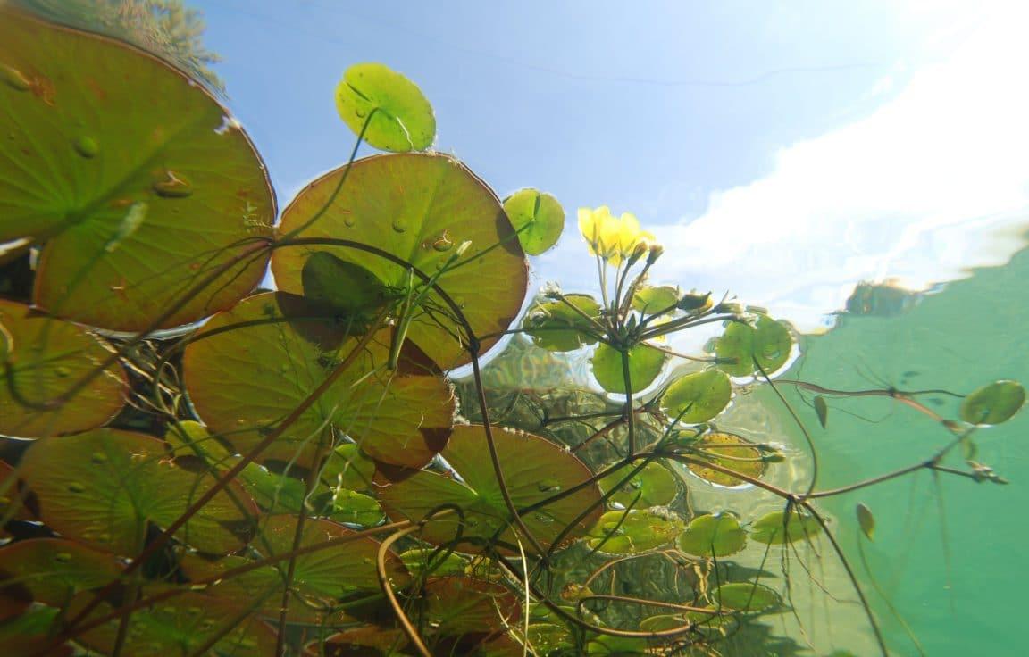 bassin jardin algues vertes