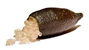 Citron caviar Citrus australasica