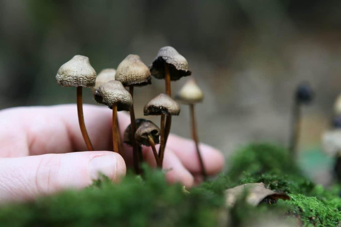 champignons fongique