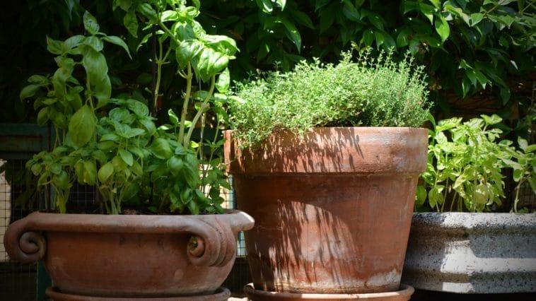 salpêtre pots