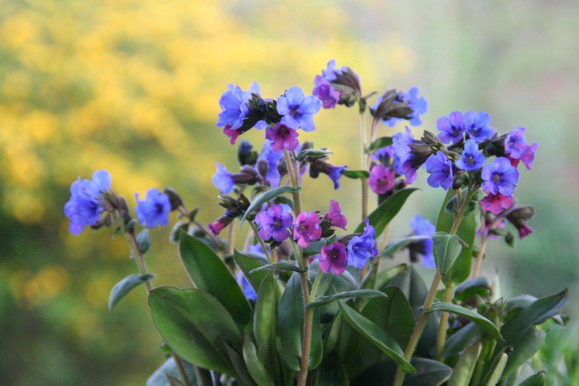 Plantes tapissantes 10 plantes couvre sol pour former un - Tapis chauffant pour plante ...