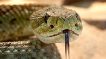 serpents jardin