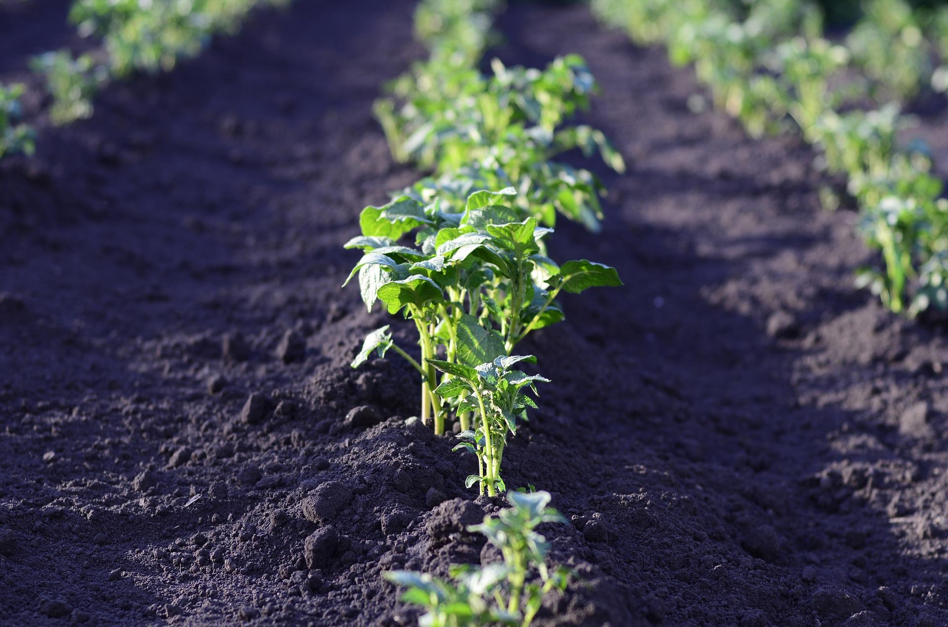 Quoi Planter Dans Une Terre Argileuse quels légumes cultiver en sol argileux, sableux, acide ou