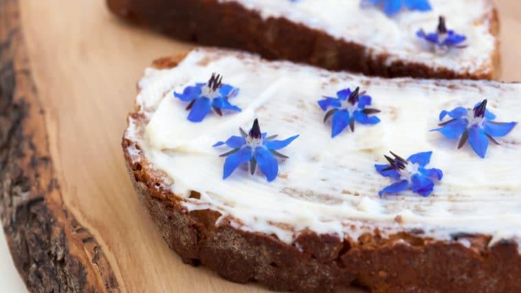 fleurs pain bourrache