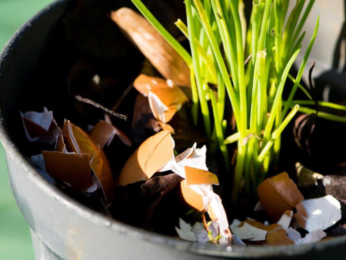 Entretenir Un Pied De Basilic 10 astuces de grand-mère pour entretenir son jardin
