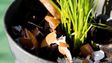 coquilles d'oeufs jardin