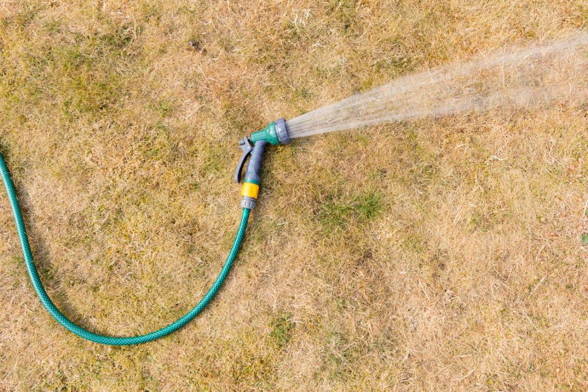 pelouse sèche