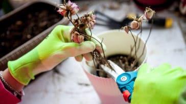 plantes canicule sèche