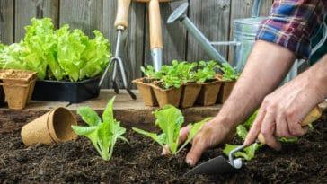 potager salade outils