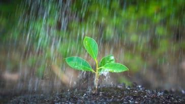 jardiner sous la pluie