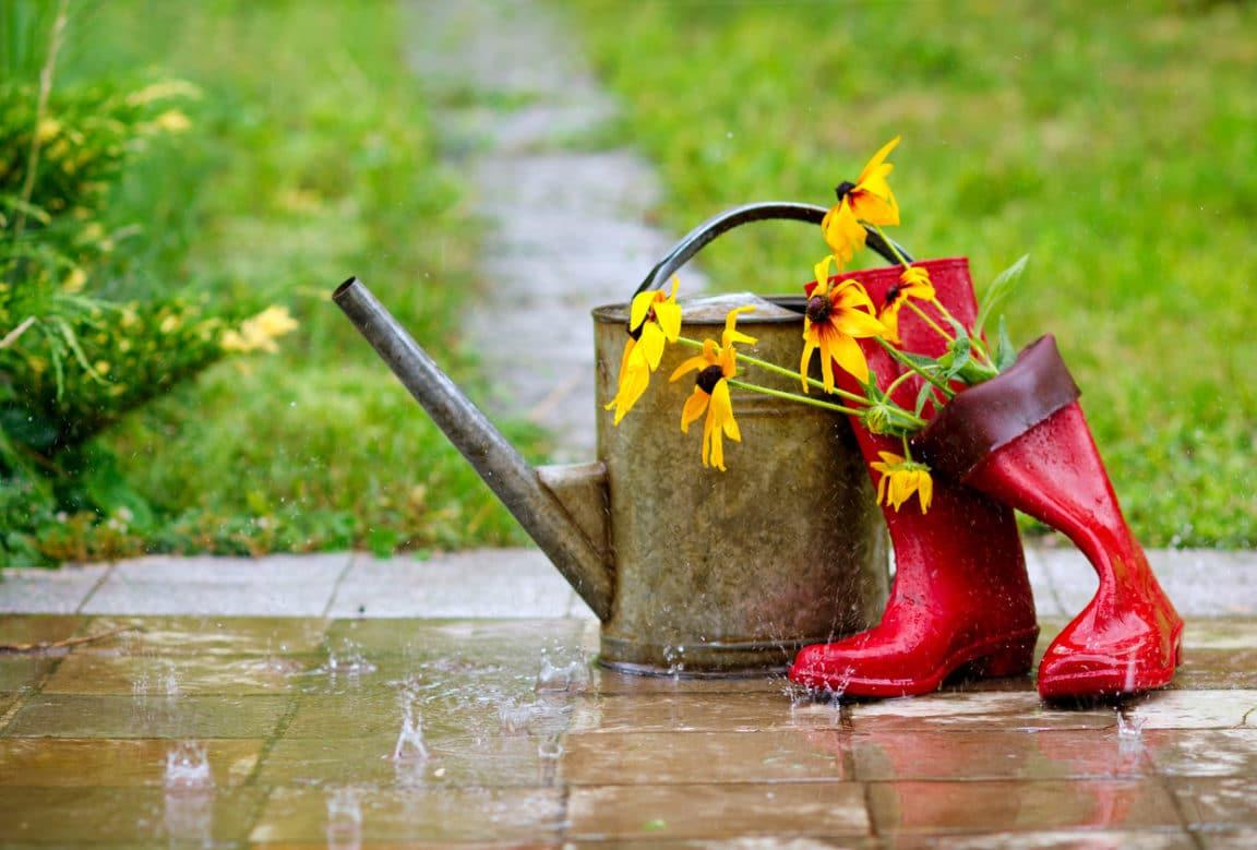 jardin pluie