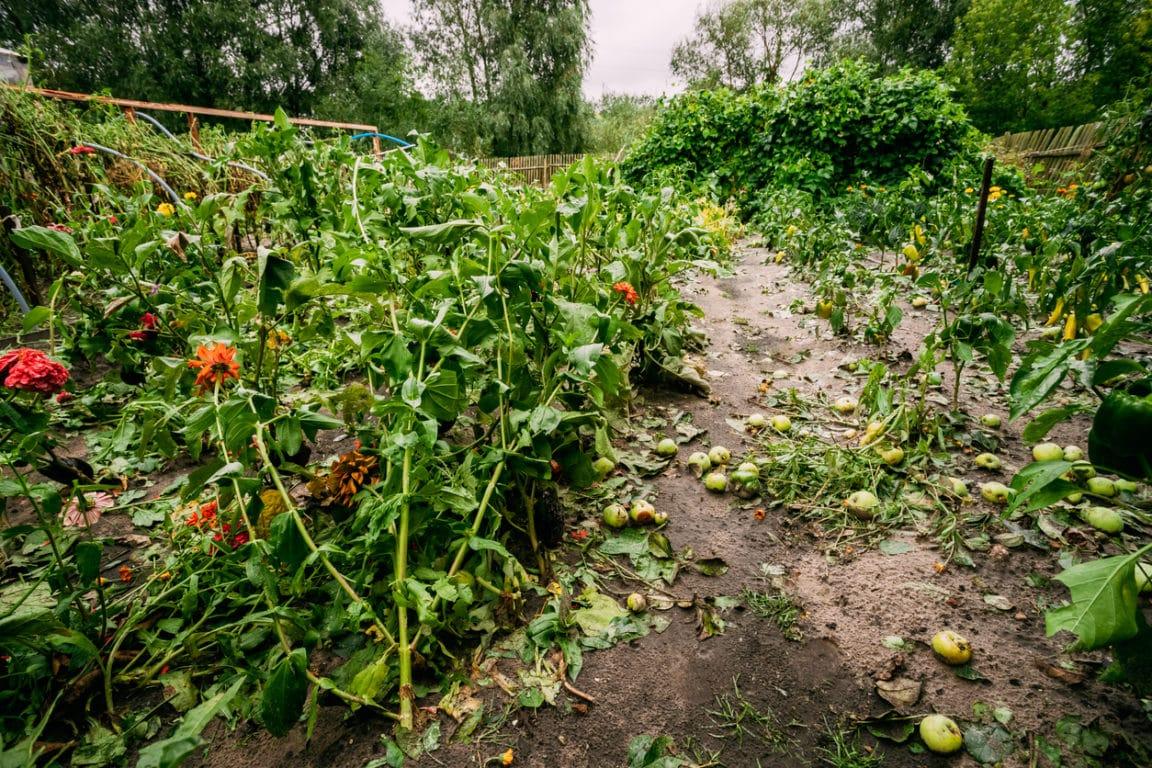 jardin dévasté